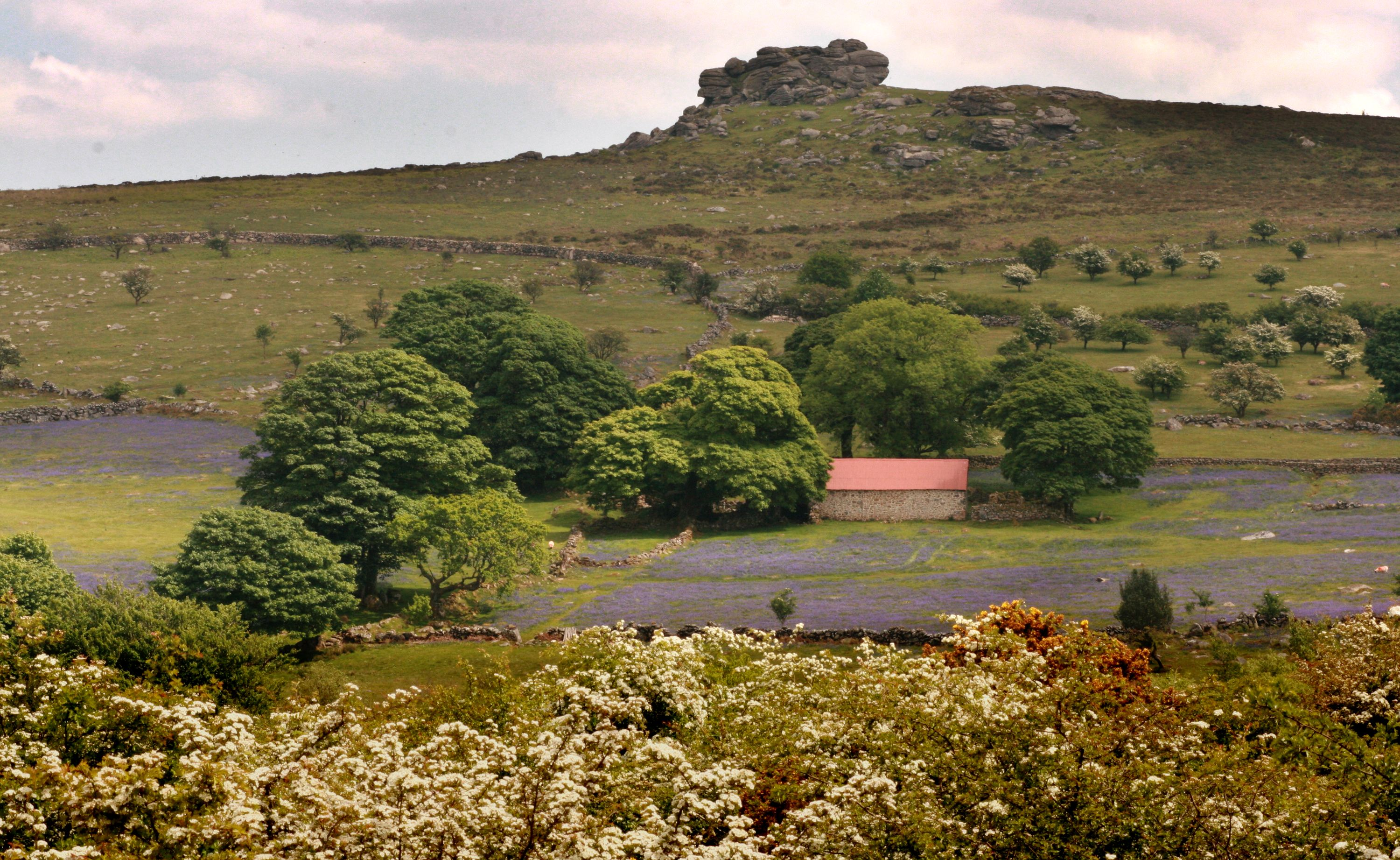 Charity Receives Vital Backing For Dartmoor Project The Exeter Daily