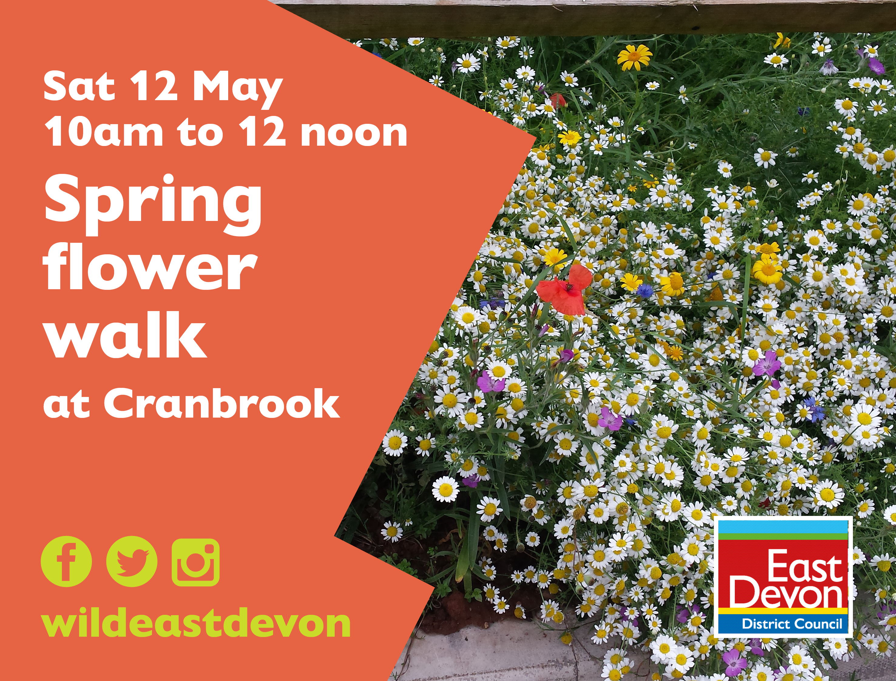Spring Flower Walk In Cranbrook The Exeter Daily