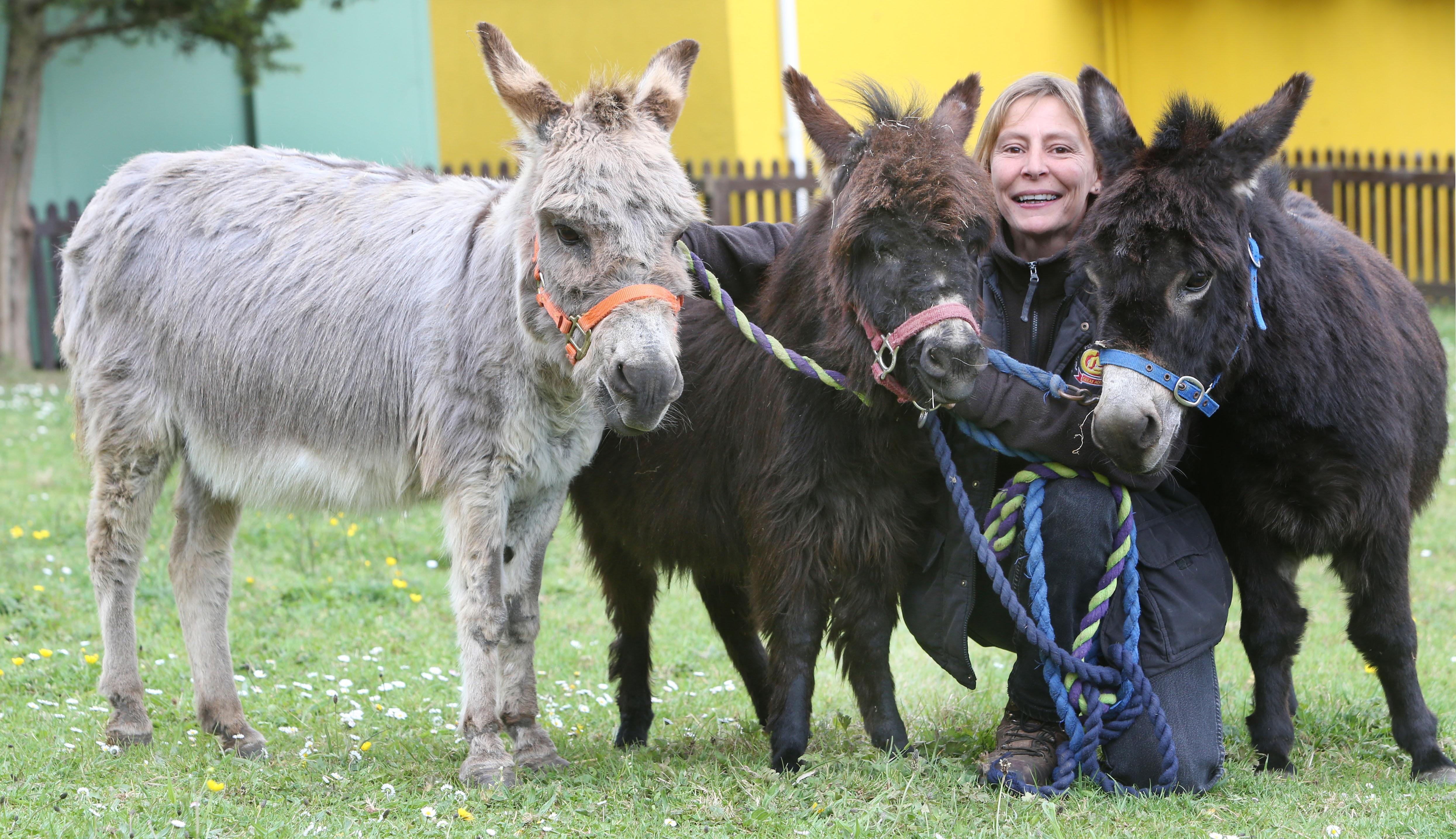 Three Generations Of Miniature Donkeys Settle In At Devon