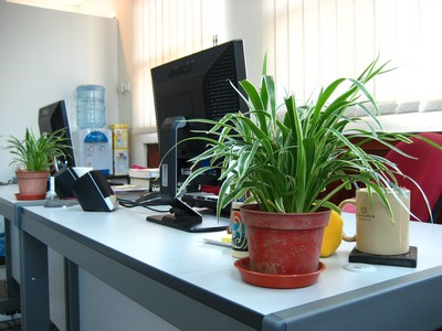 office plants boost well being at work the exeter daily