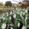 Snowdrop Festival, The Garden House