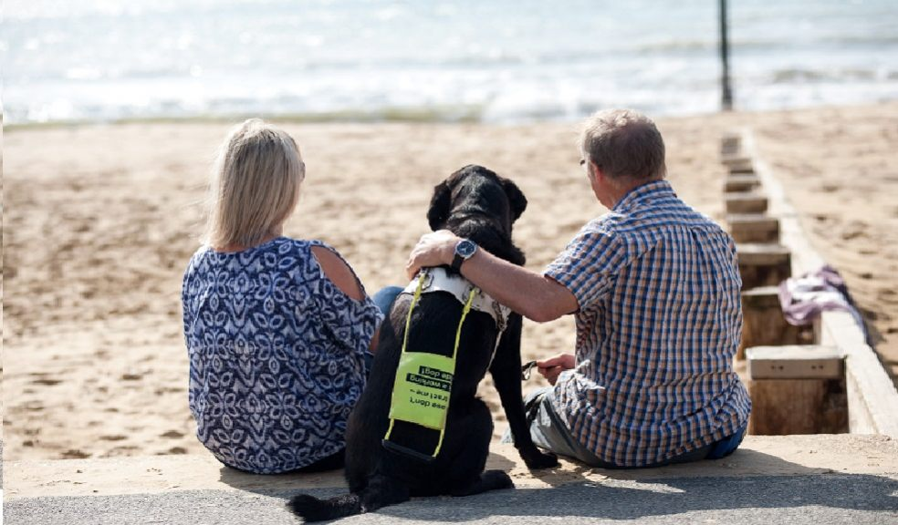 A guide dog sits on the beach in between two people. He has a yellow and white harness on.