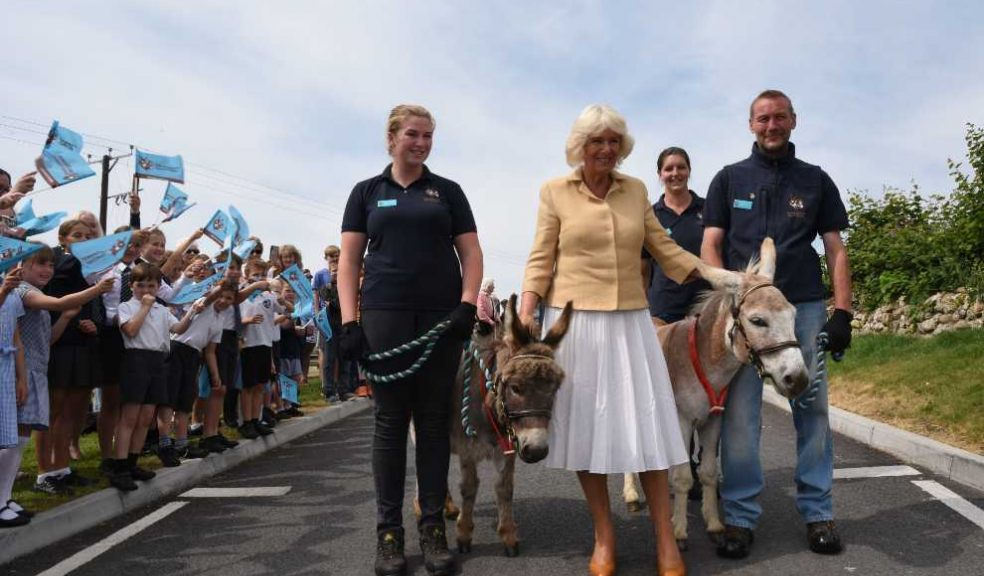 HRH Duchess of Cornwall meets donkeys called William and Harr.  Photo: The Donkey Sanctuary