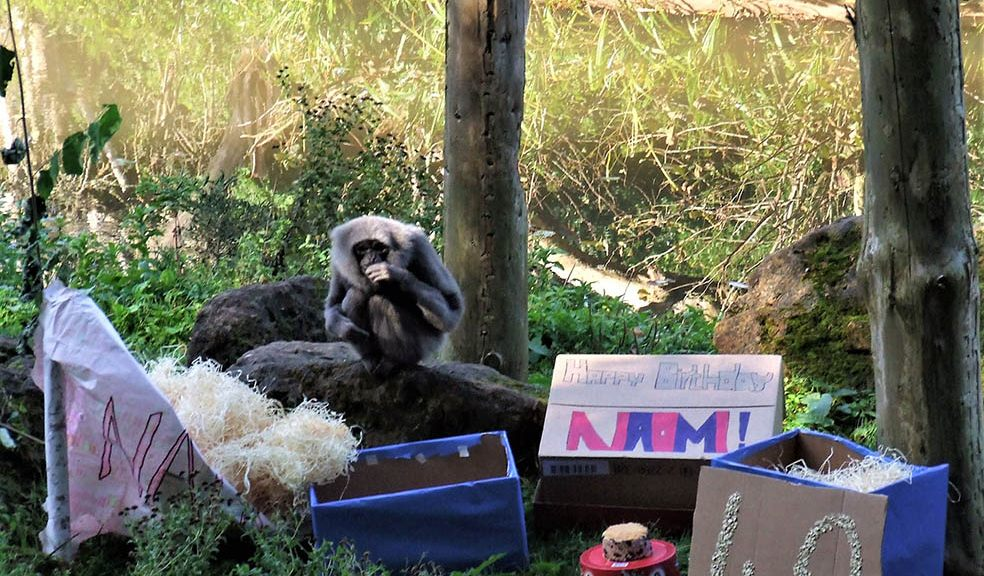 Zoo says farewell to popular old gibbon