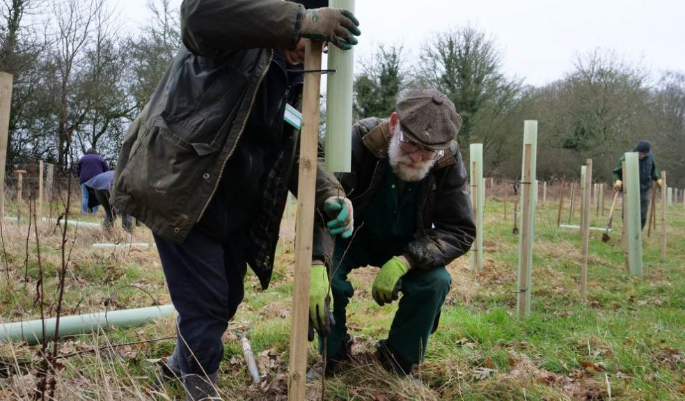 Tree planting. Photo: Catherine Hadler