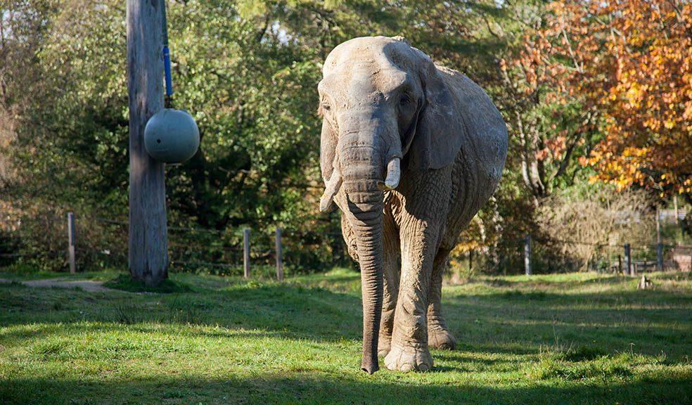 Zoo plans Duchess memorial