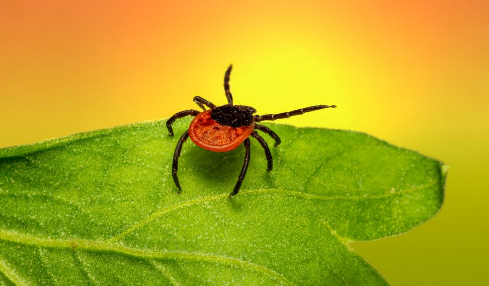 Planting for the Newbies: Common Plant Diseases and Pests