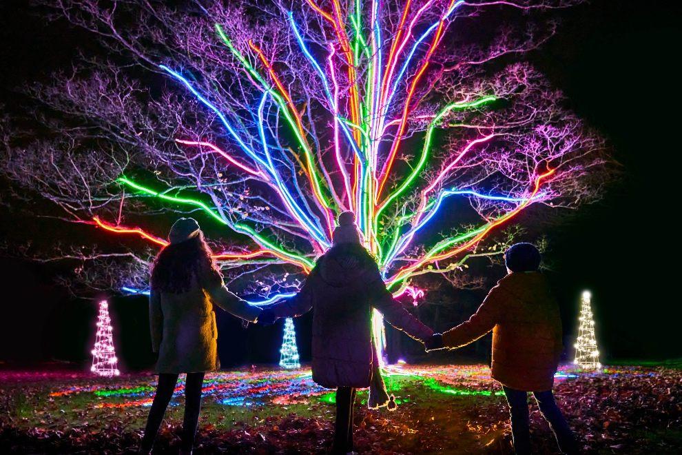 Christmas, Killerton, Lights
