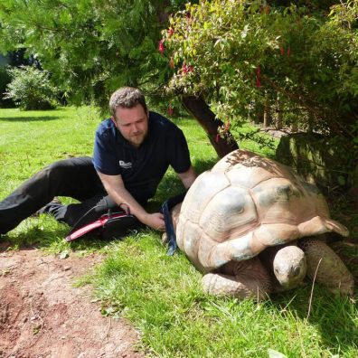 Zoo shells out for giant tortoise physio