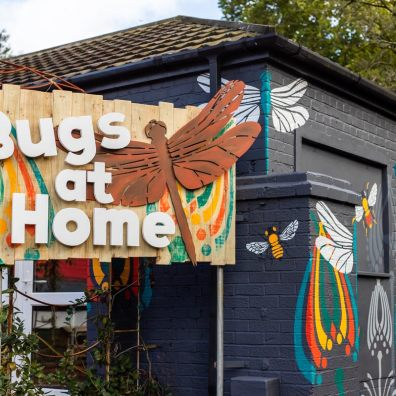 Home is where the bugs are...