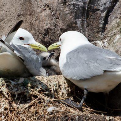 Happy bird-day at Living Coasts…