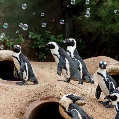 Living Coasts - everyone's local zoo