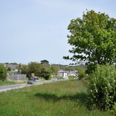 Road verges provide opportunity for wildflowers, bees and trees
